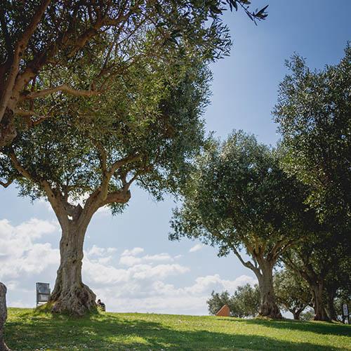 קבורת כד אפר תחת עץ