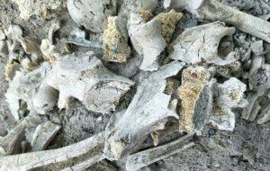 שרידי שריפת גופות - עצמות ואפר